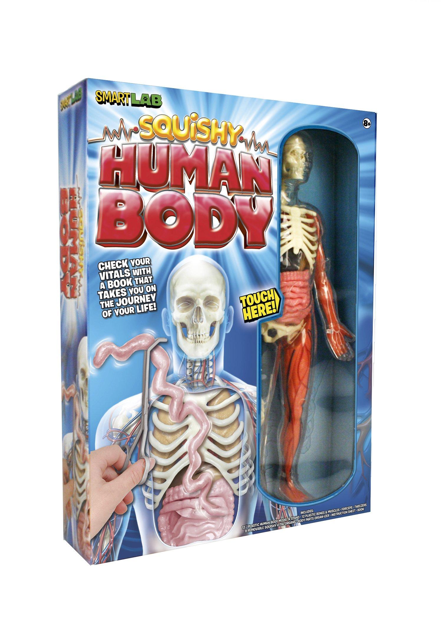 Squishy Human Body : SmartLab Toys Squishy Human Body Educational Science Kids Toy Anatomy Game New 1932855785 eBay