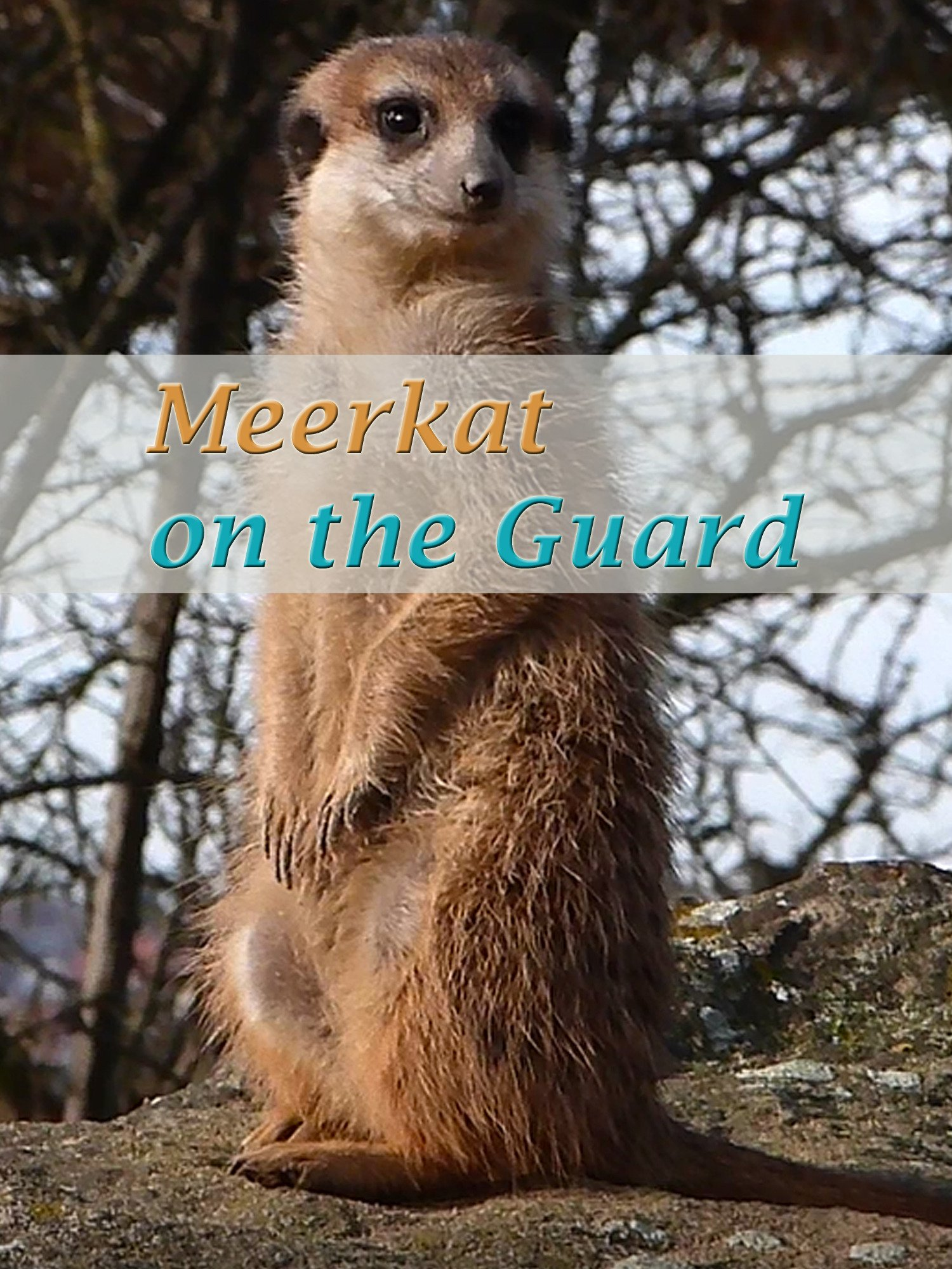 Meerkat on the Guard