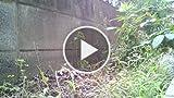 レコロIR7レビュー:超お手軽タイムラプス撮影レコーダ。大空の躍動感、雑草の生命力も動画に