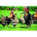Pacific Southwest Poultry Pasture Blend (1500 sq ft) (Color: Eco Region, Tamaño: 1500 sq. ft.)