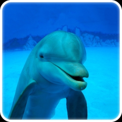 story-my-dolphin-show