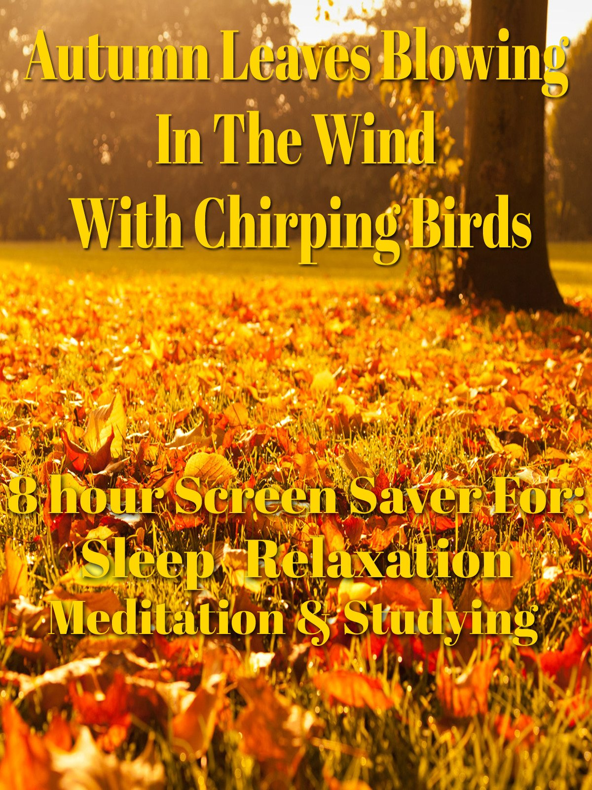 Autumn leaves blowing in the wind with chirping birds 8 hour screen saver for sleep meditation relaxation & studying