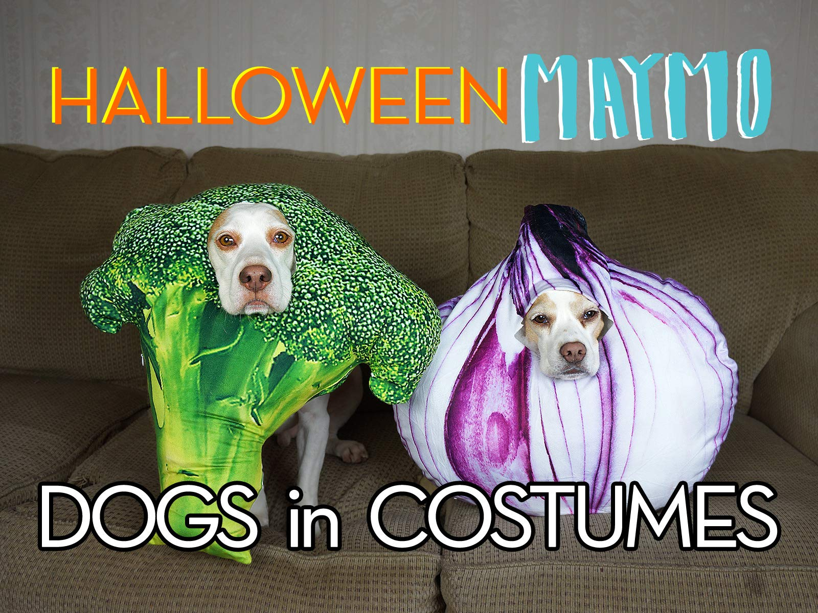 Clip: Halloween Maymo: Dogs in Costumes - Season 1