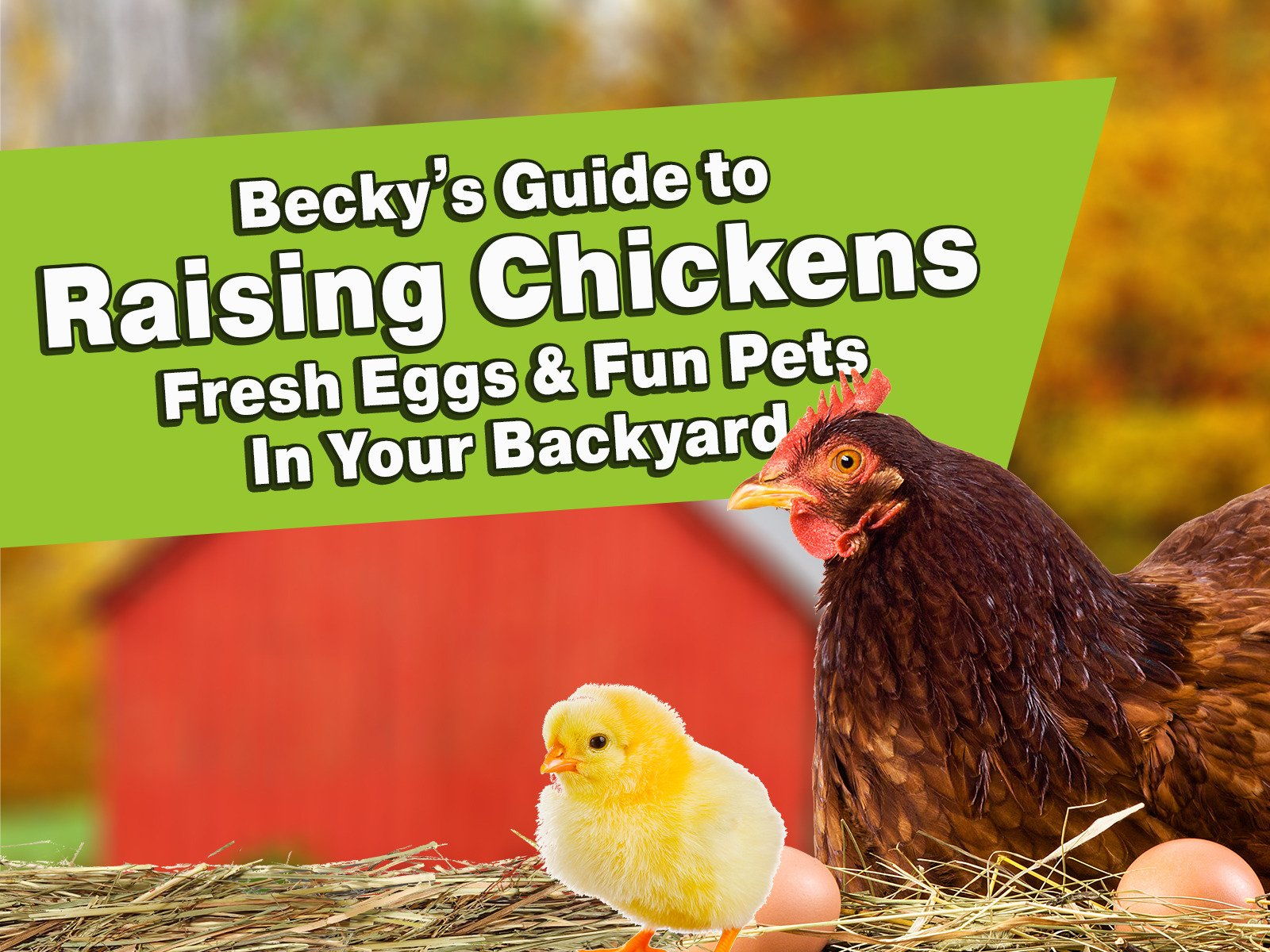 Becky's Guide to Raising Chickens - Season 1