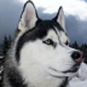 Amazon.com: Free Husky Wallpapers - Commentbug.com: Appstore for