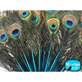 Peacock Feathers, 10 Turquoise Blue Mini Natural Peacock Tail Feathers with Eyes