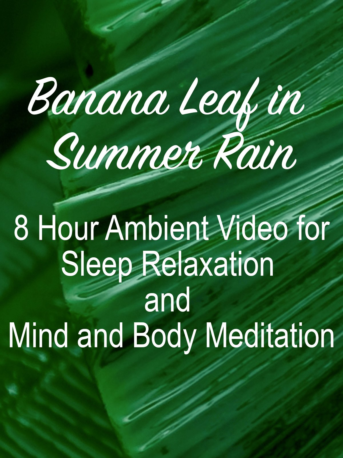 Banana Leaf in Summer Rain 8 Hour Ambient Video for Sleep Relaxation and Mind and Body Meditation