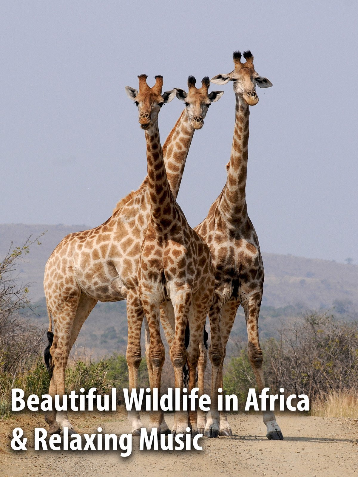 Beautiful Wildlife in Africa & Relaxing Music