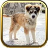 More Cute Puppies Jigsaw Puzzle Games