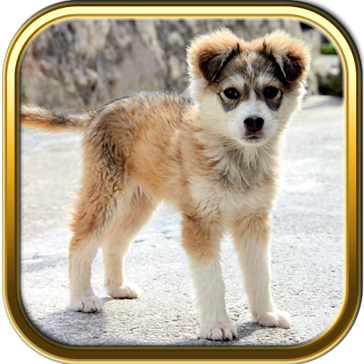 more-cute-puppies-jigsaw-puzzle-games