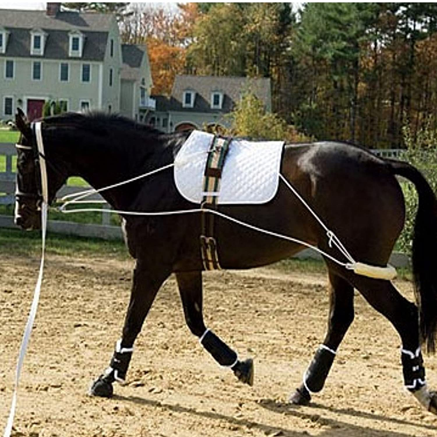 The Ultimate Horse Lunging