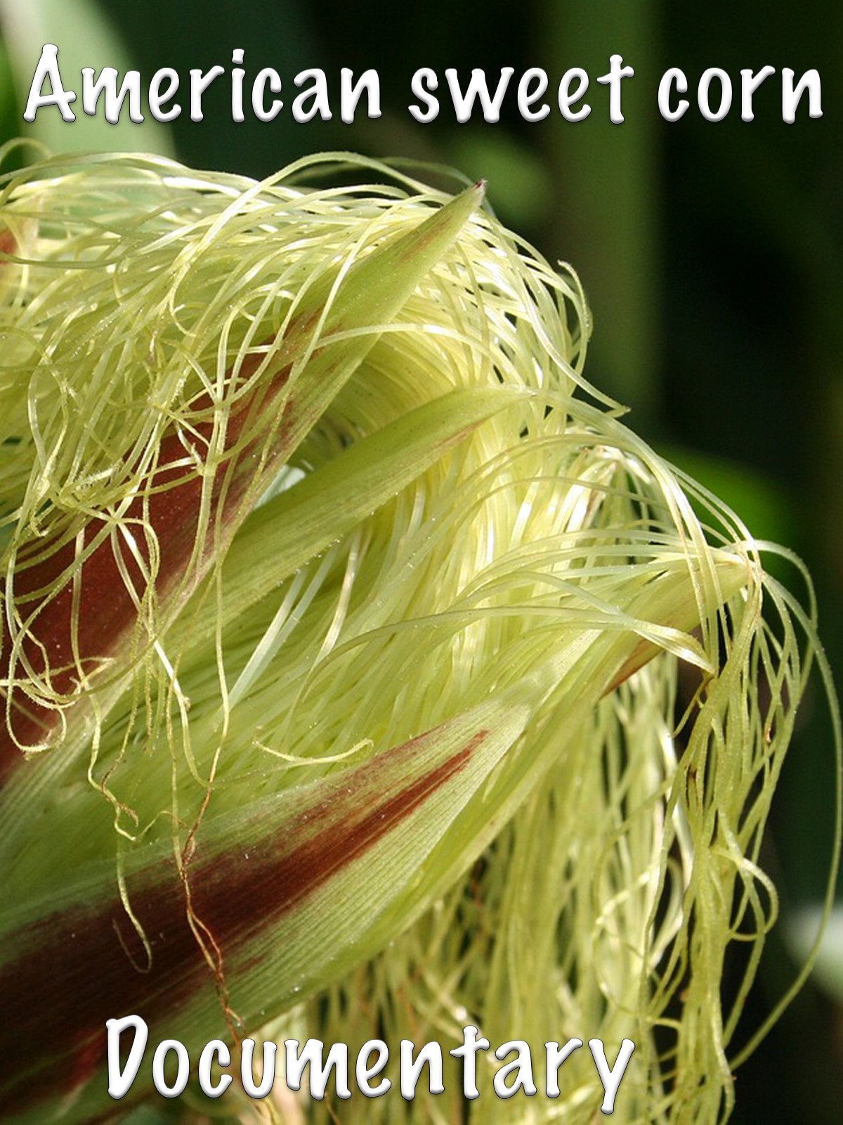 American sweet corn: Documentary