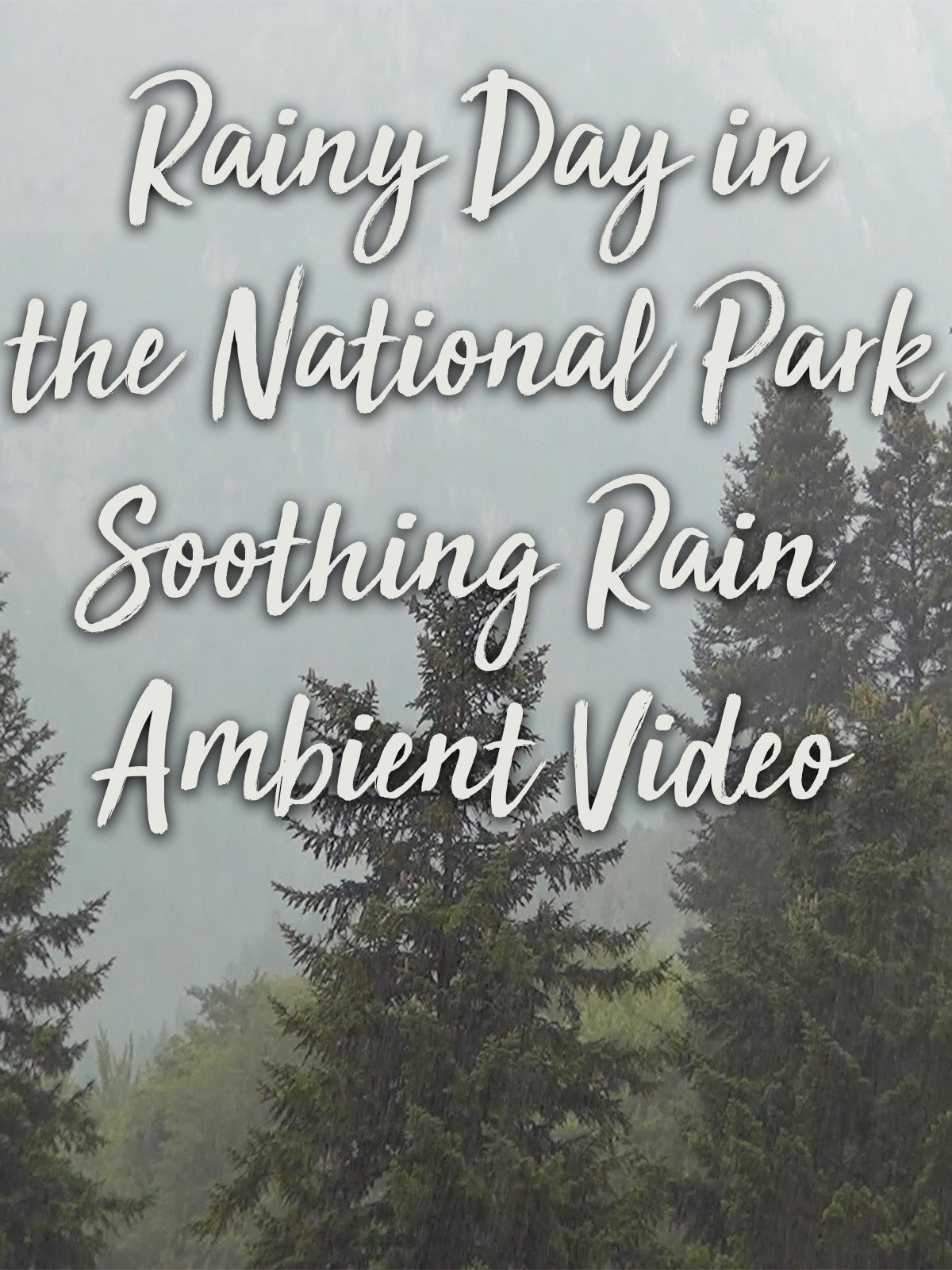 Rainy Day in the National Park Soothing Rain Ambient Video