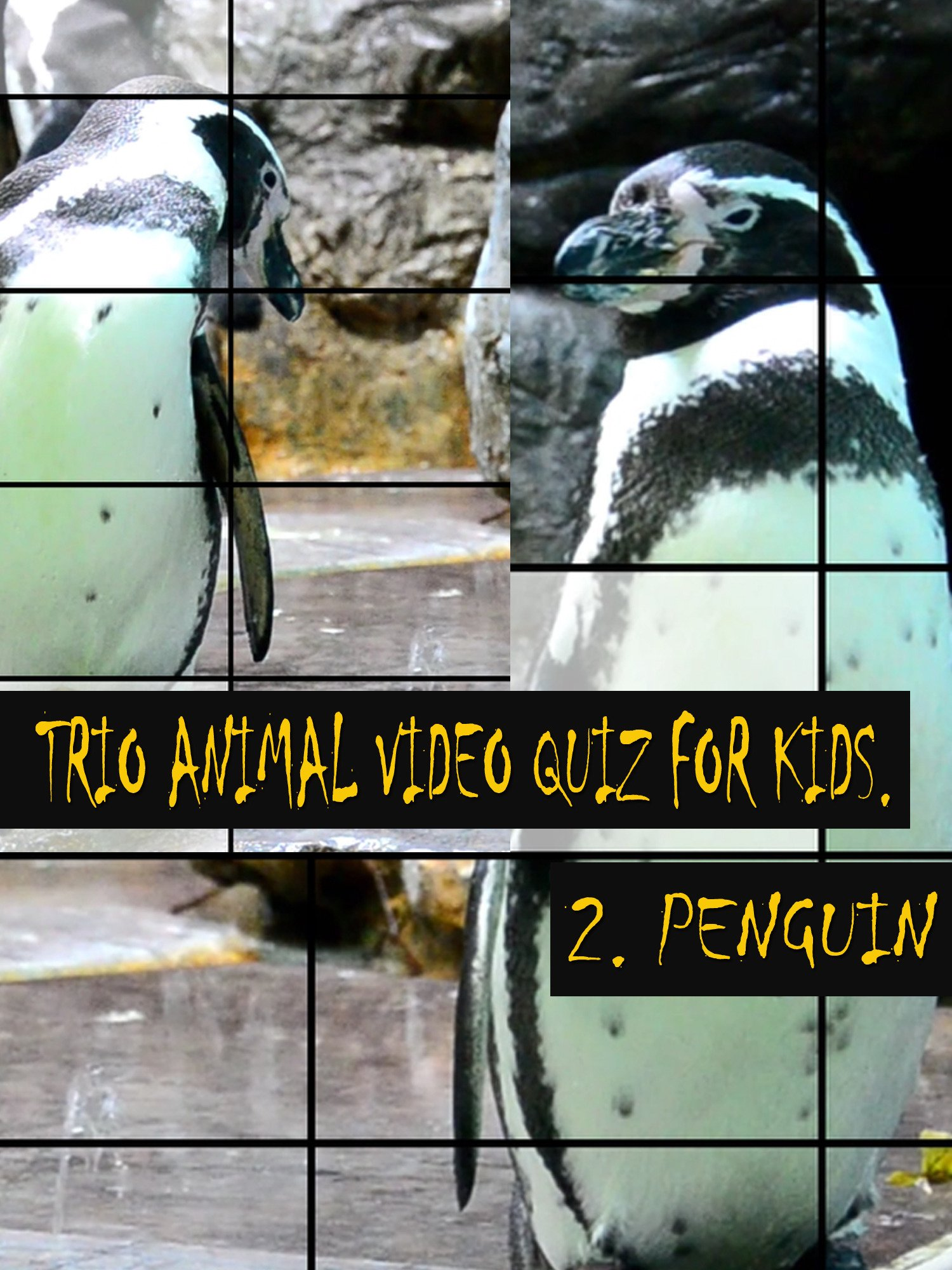Trio Animal Video Quiz for Kids. 2. Penguin