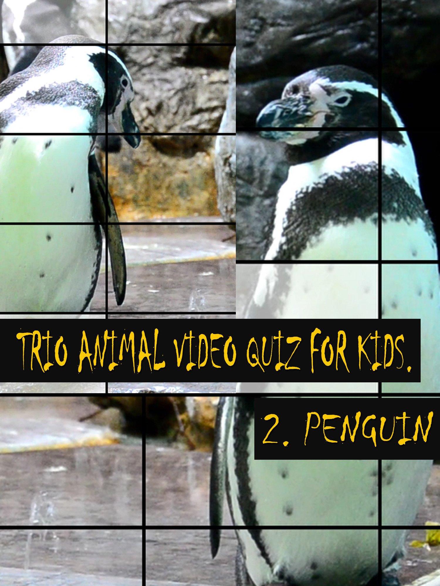 Trio Animal Video Quiz for Kids. 2. Penguin on Amazon Prime Instant Video UK