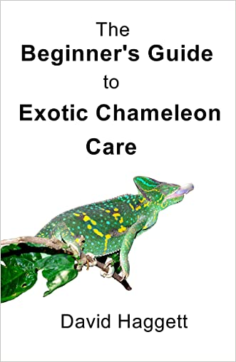 The Beginner's Guide to Exotic Chameleon Care