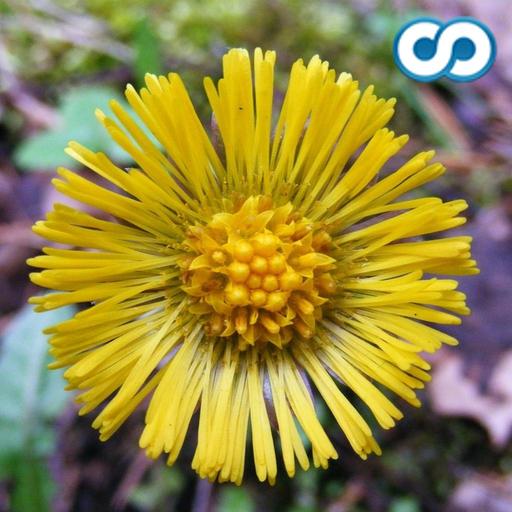 fleur-especes-trivia-quiz