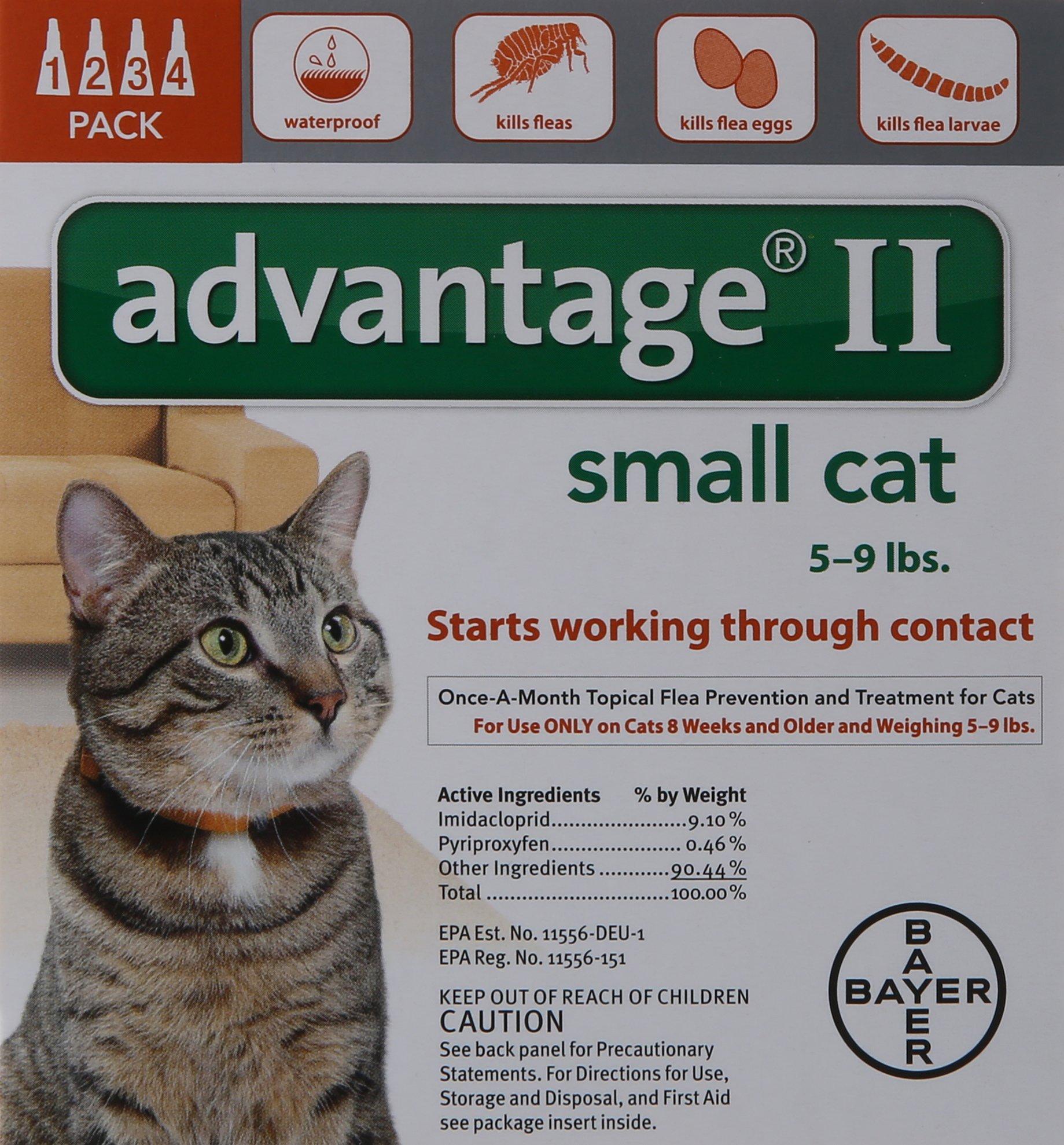 domestic tiger cat