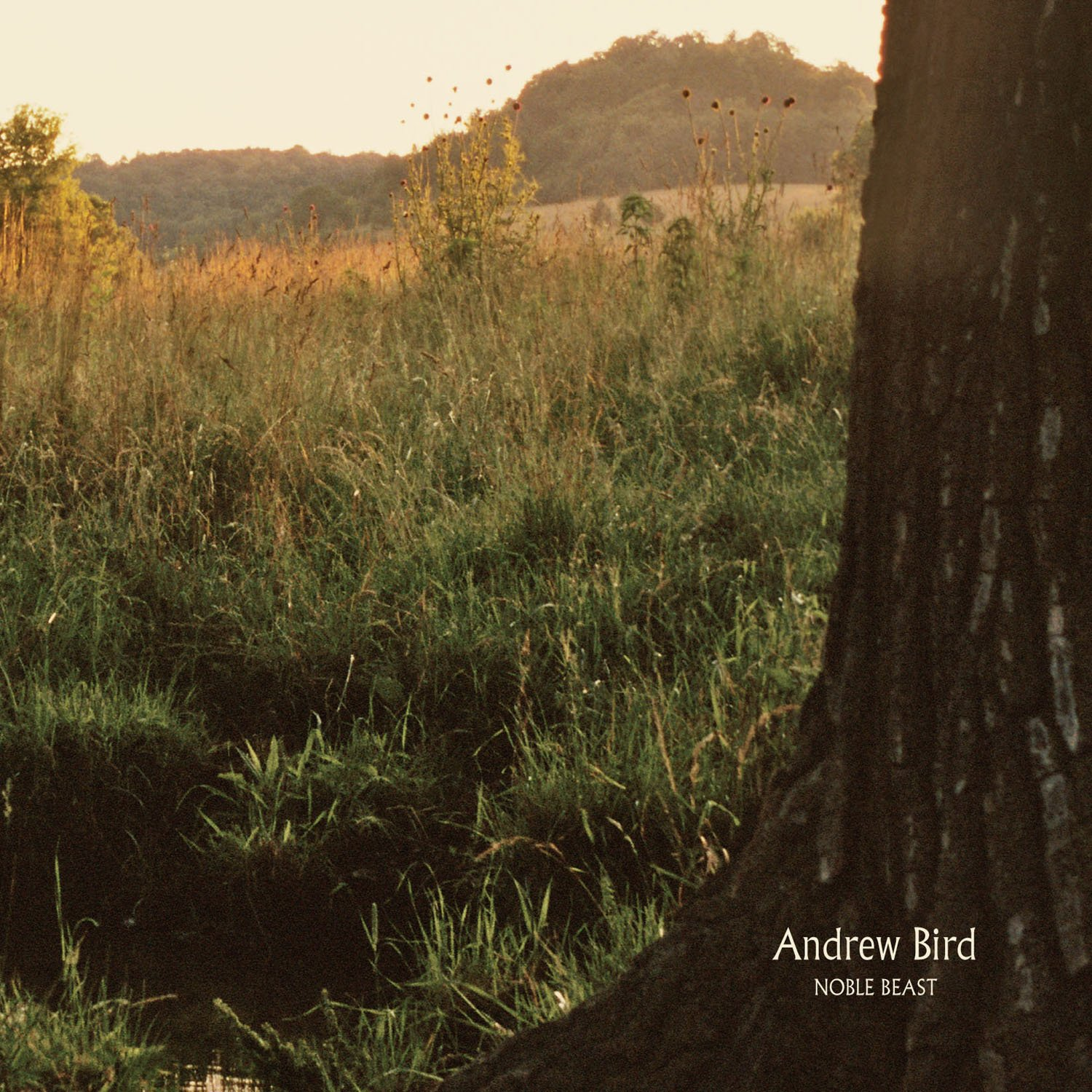 Andrew Bird Album Andrew Bird Noble Beast