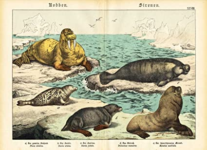 SEAL-WALRUS-ELEPHANT