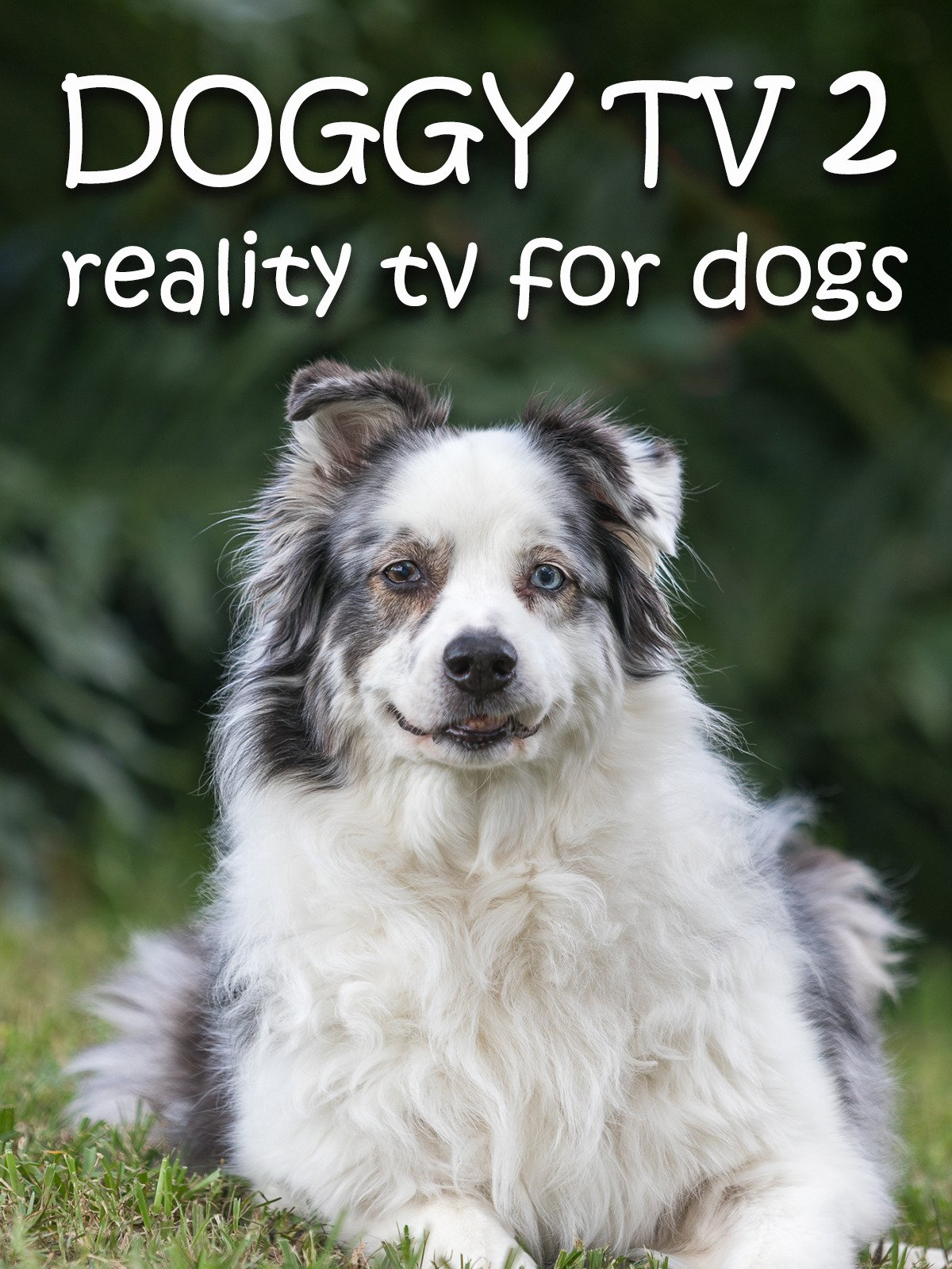 Doggy TV 2 (Reality TV for Dogs)