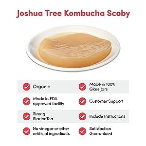 Organic Kombucha Scoby & Starter Tea by Joshua Tree Kombucha   (No Vinegar Added!)