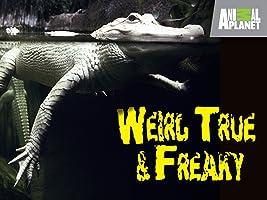 Weird True and Freaky Season 1