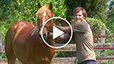 Lost Stallions: The Journey Home - Trailer