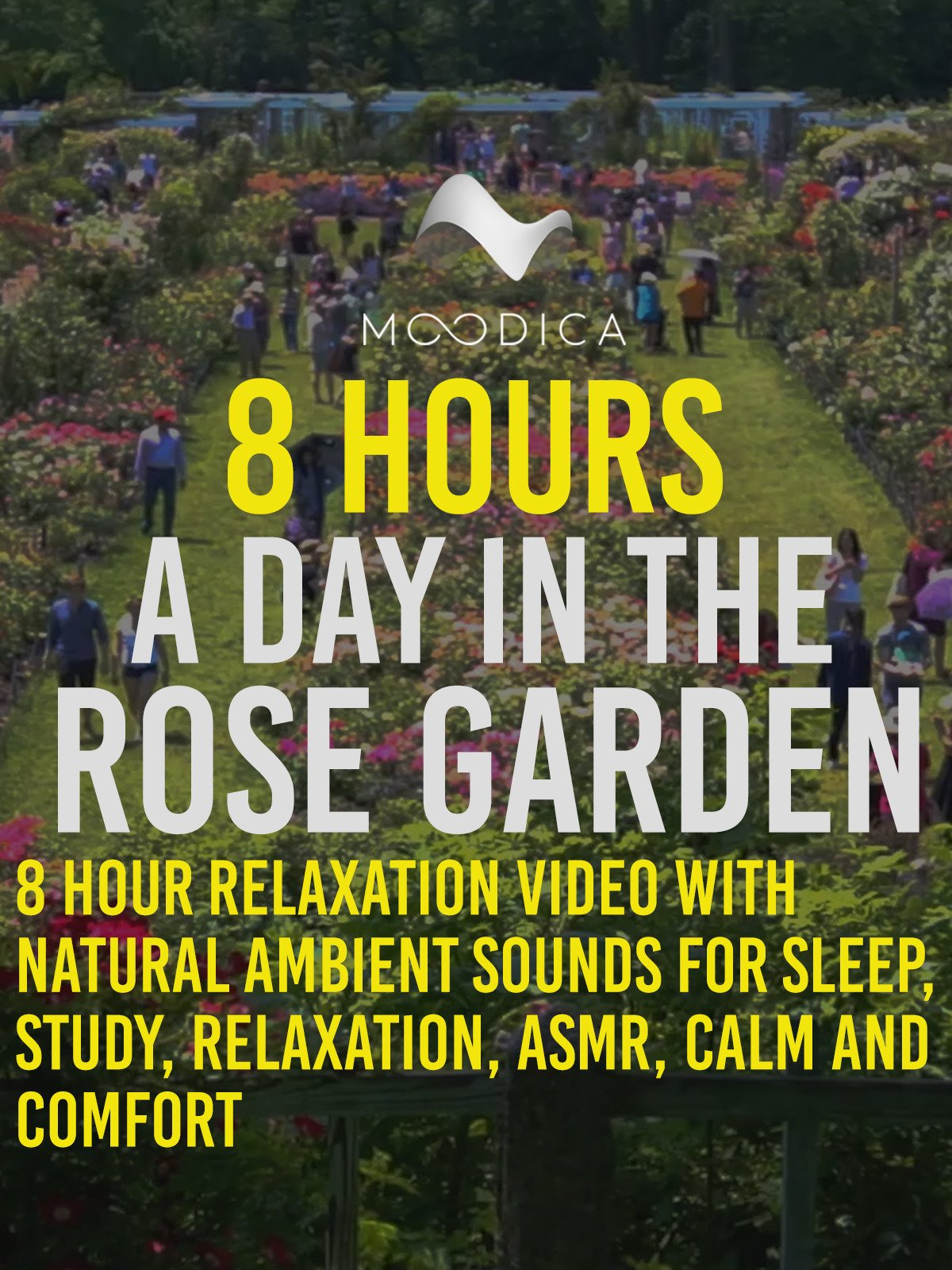 8 Hours: A Day In The Rose Garden: 8 Hour Relaxation Video With Natural Ambient Sounds for Sleep, Study, Relaxation, ASMR, Calm and Comfort