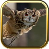 Owl Jigsaw Puzzle Games