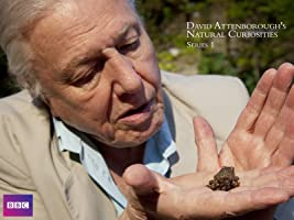 David Attenborough's Natural Curiosities, Series 1