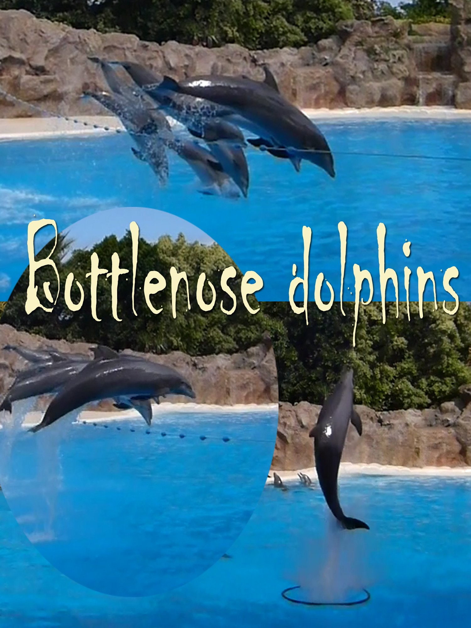 Bottlenose dolphins on Amazon Prime Instant Video UK