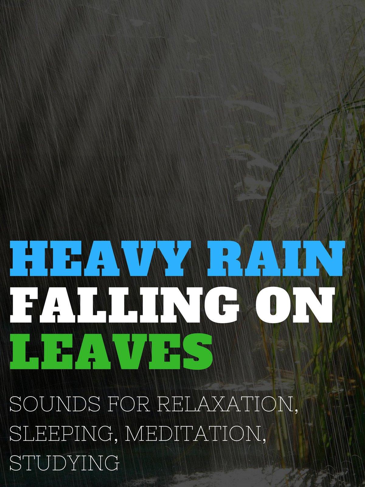 Heavy Rain Falling on Leaves