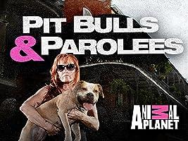 Pit Bulls & Parolees Season 8
