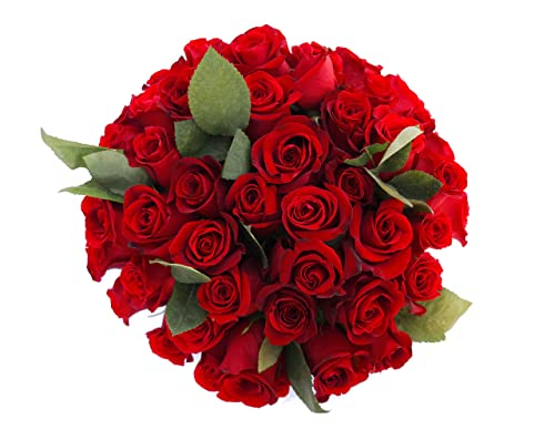 Long Stem Fresh Red Roses