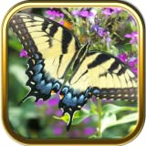 Butterfly Puzzle Games