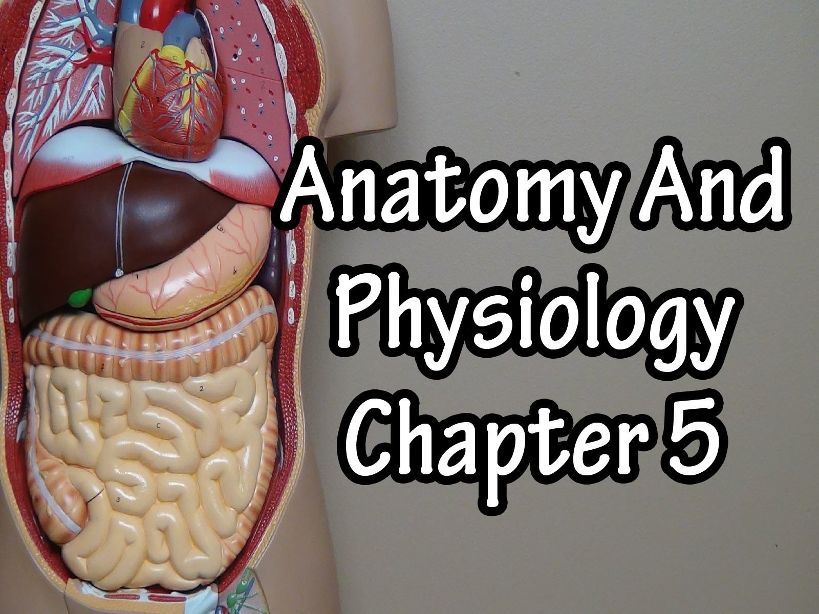 Anatomy And Physiology Chapter 5 - Season 1