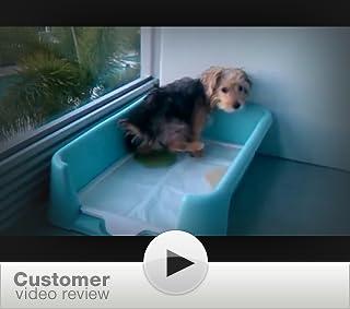 Rascal Dog Litter Box Little Squirt Reviews