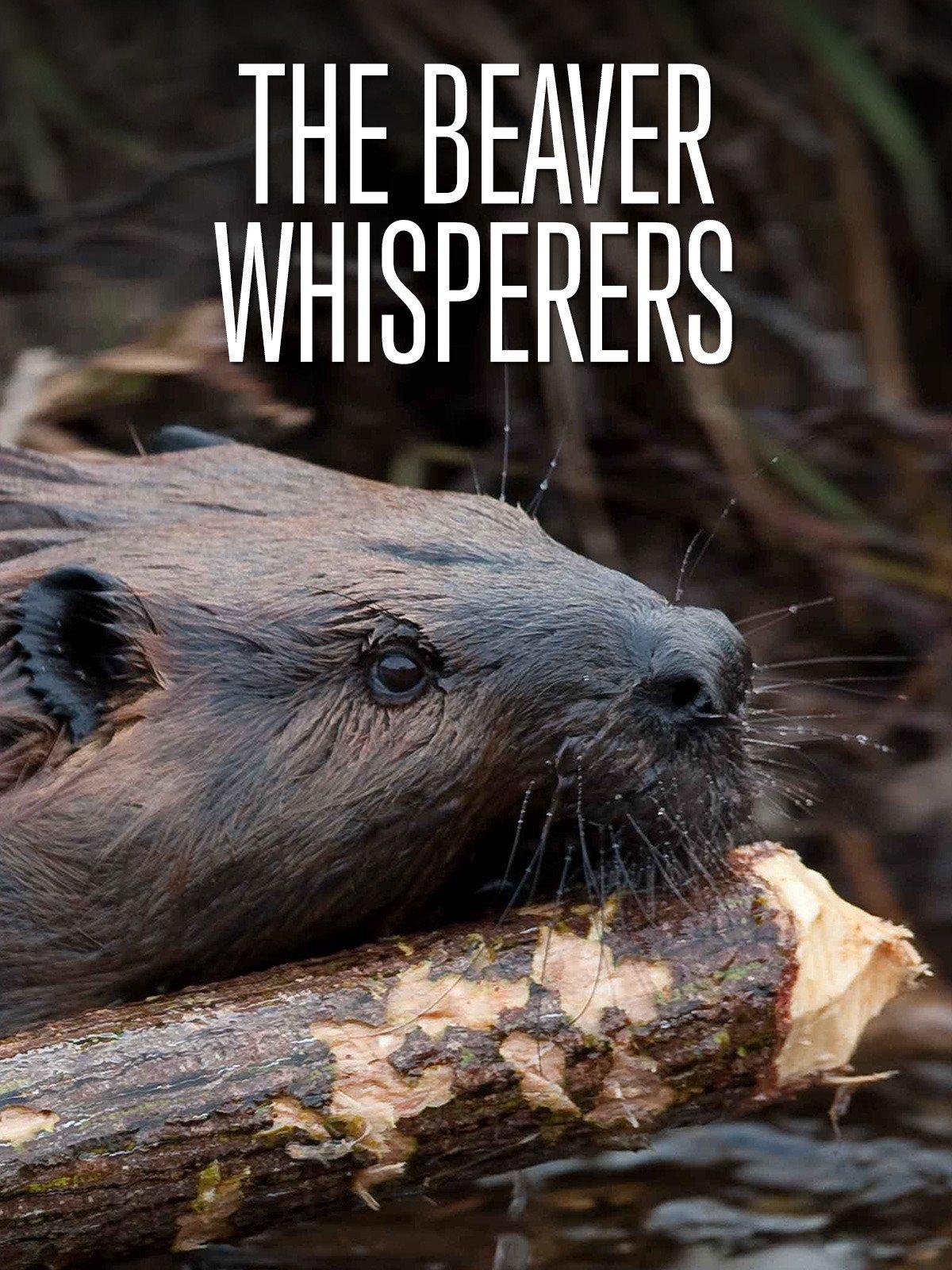 The Beaver Whisperers
