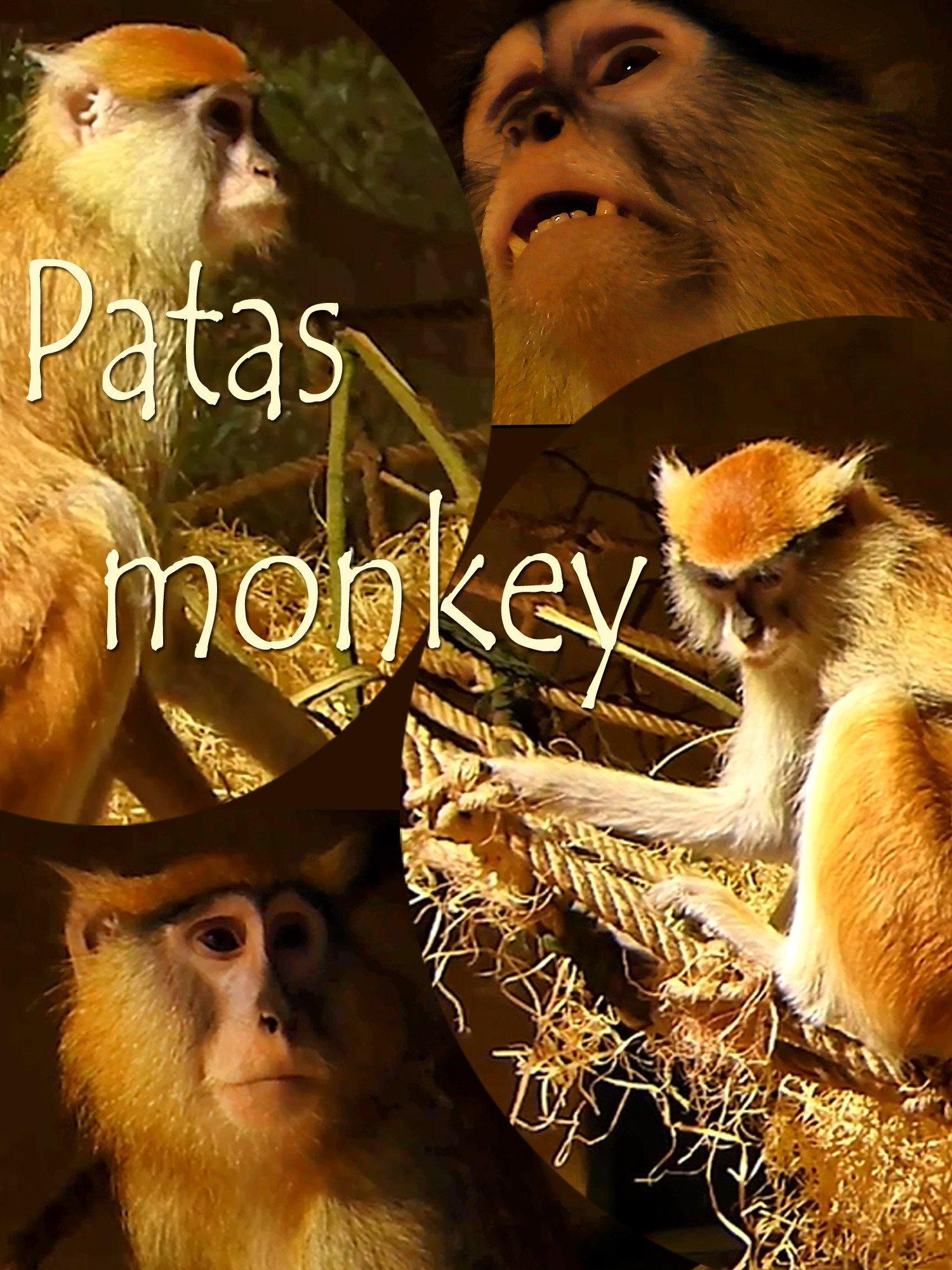 Patas monkey on Amazon Prime Instant Video UK
