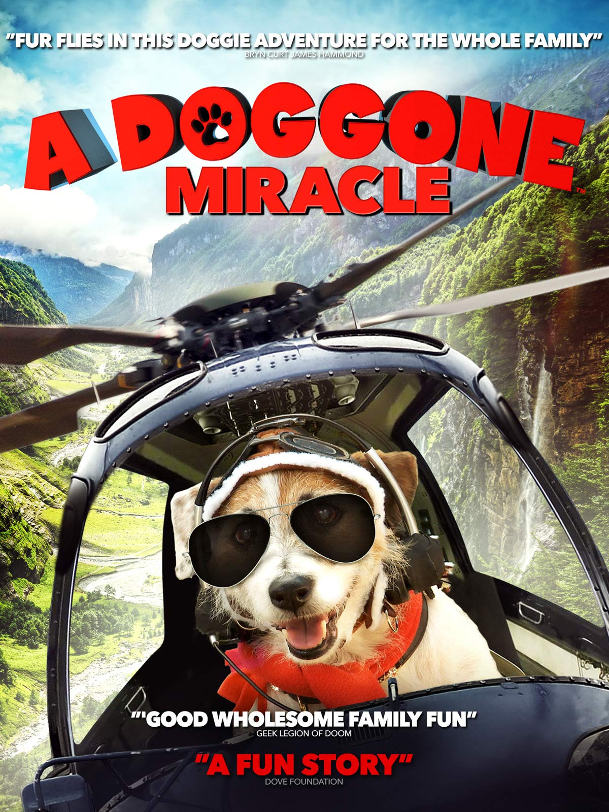 A Doggone Miracle