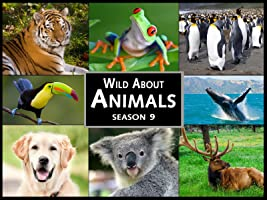 Season 9 Wild About Animals [HD]