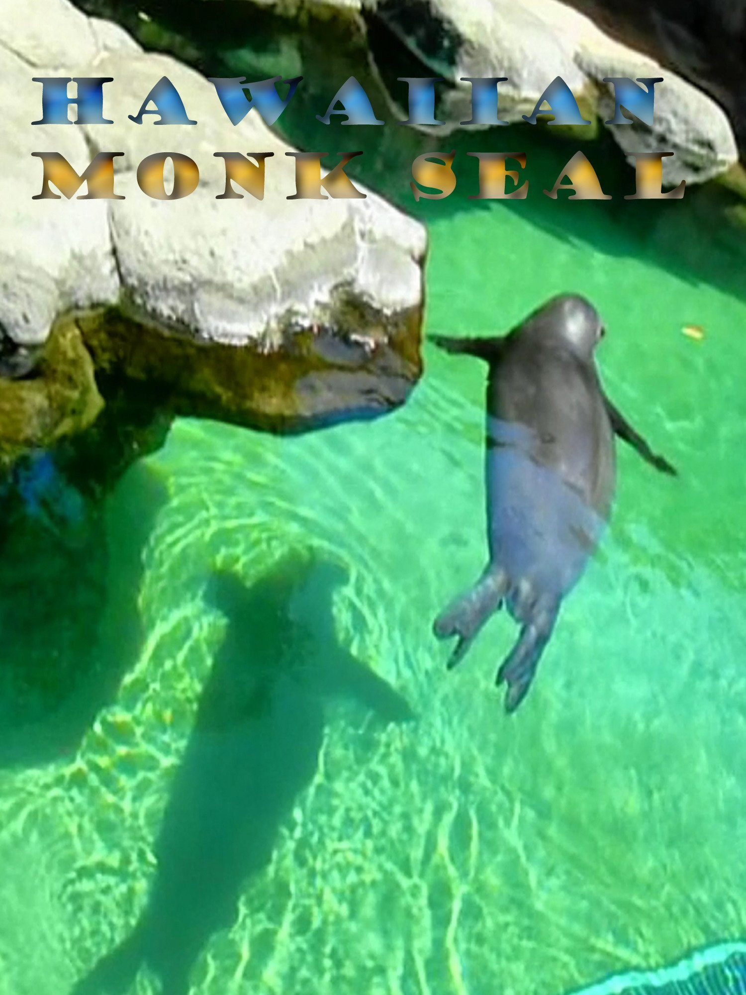 Clip: Hawaiian Monk Seal