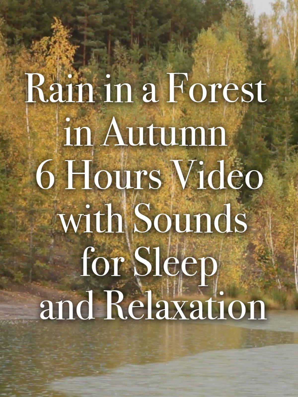 Rain in a Forest in Autumn 6 Hours Video with Sounds for Sleep and Relaxation