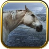 Horse Jigsaw Puzzle Games