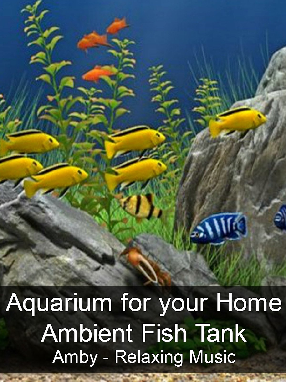 Aquarium for your Home