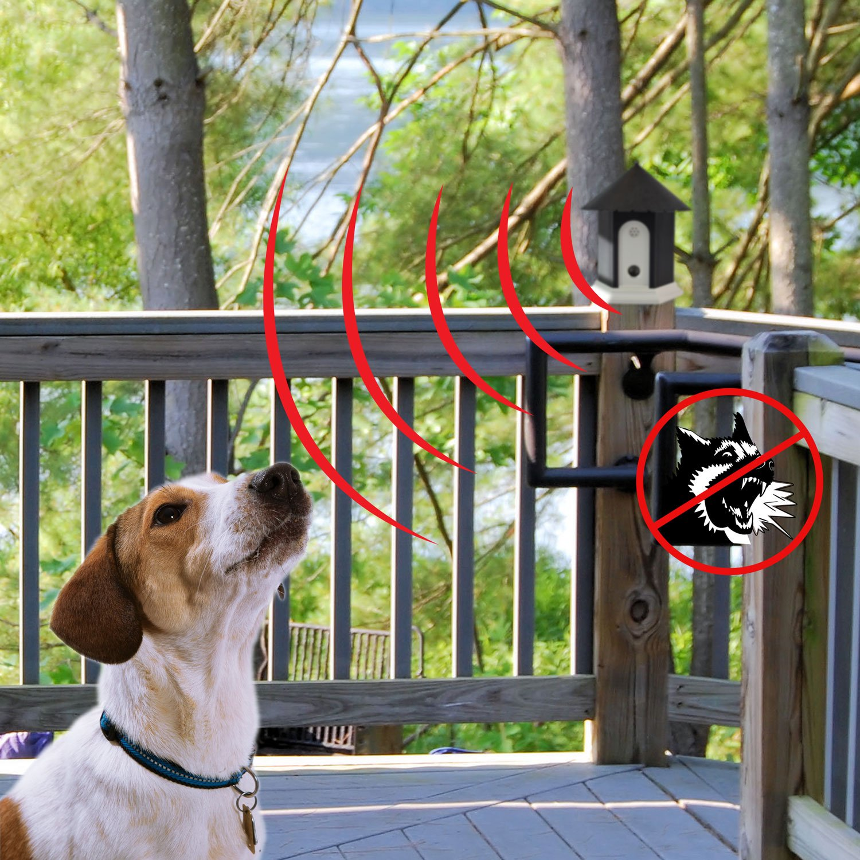 Neighbor Dog Nuisance Barking