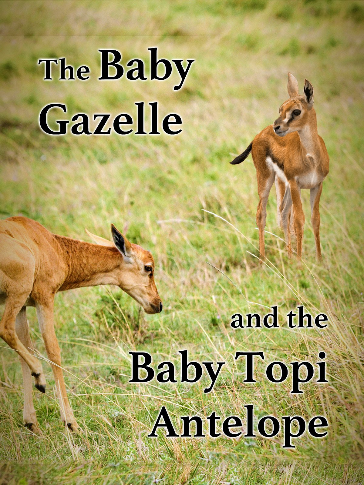 The Baby Gazelle & The Baby Topi Antelope