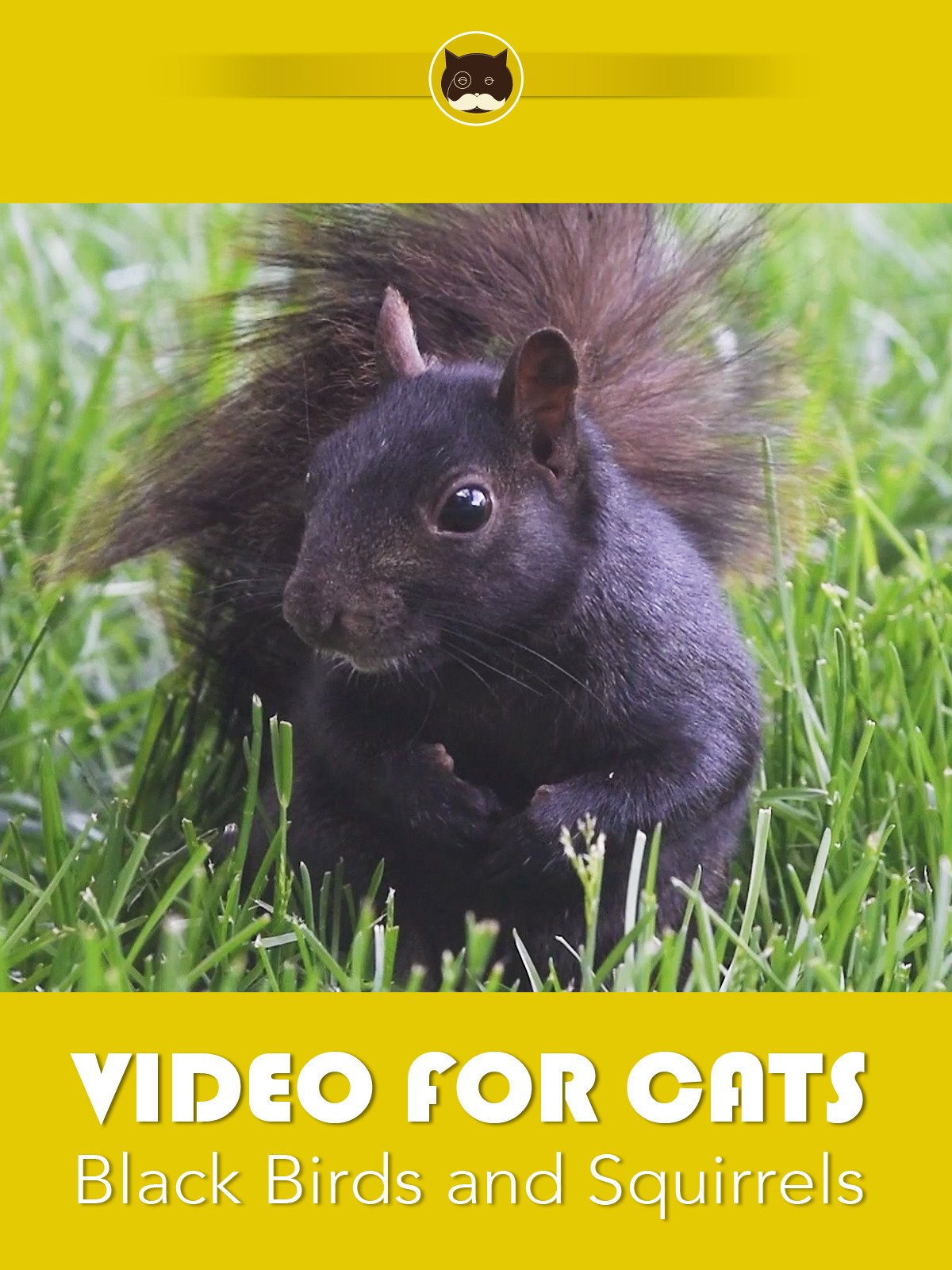 Video for Cats Black Birds and Squirrels