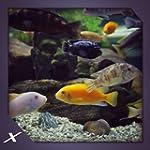 Chichild Fish Aquarium